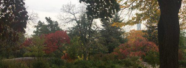 Fall in Love with Central Park – Part 2