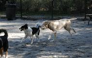 72nd Street Dog Run