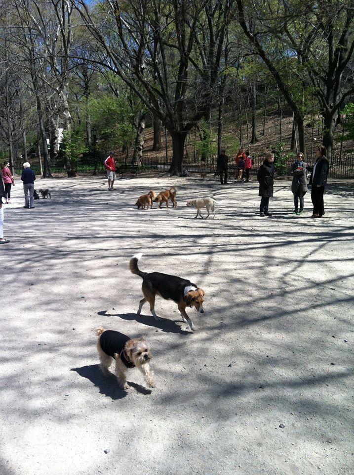 105th Street Dog Run