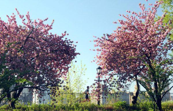 spring on the Upper West Side