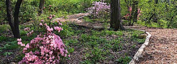 Central Park's Hidden Gem Opens its Doors to the Public