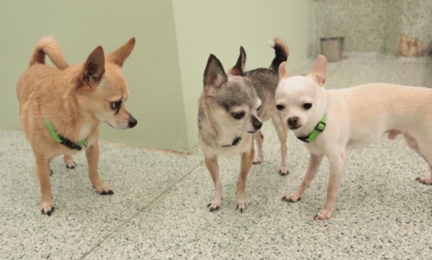 little-dogs-1
