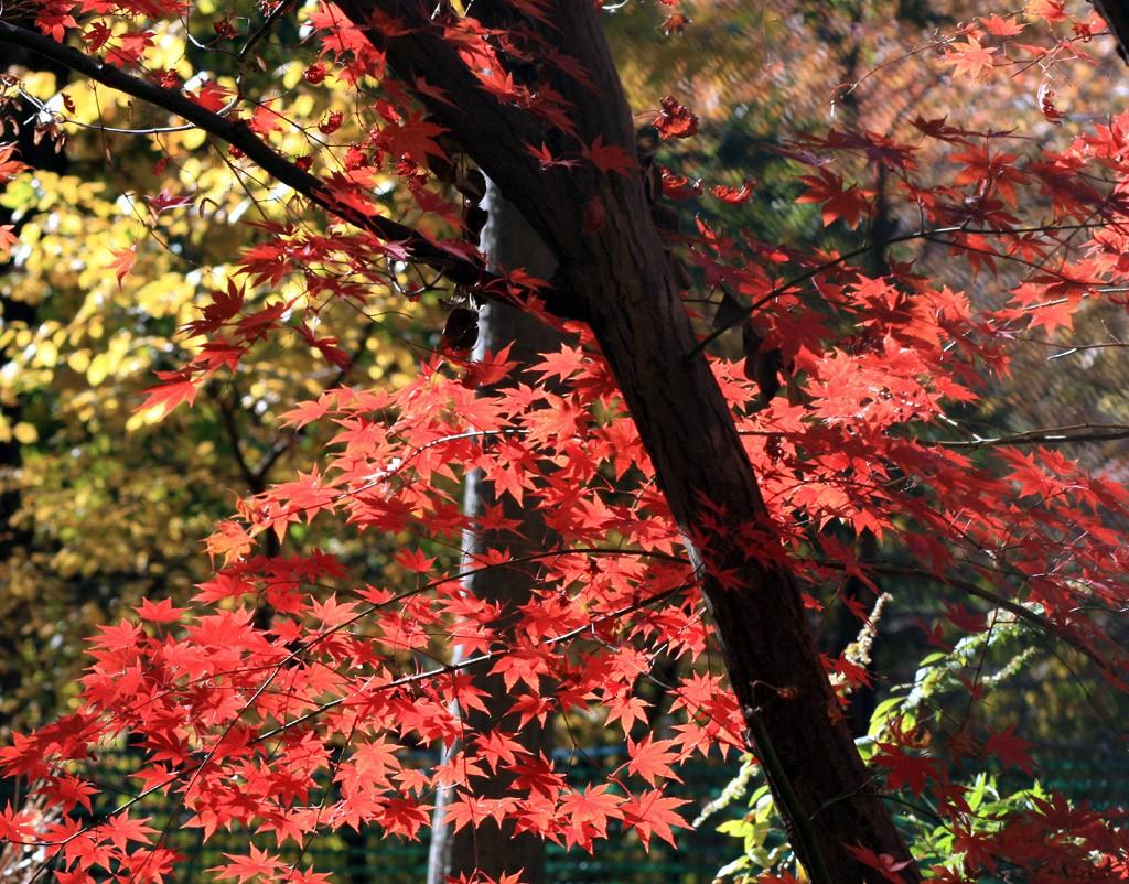 Central Park Fall Foliage Spots