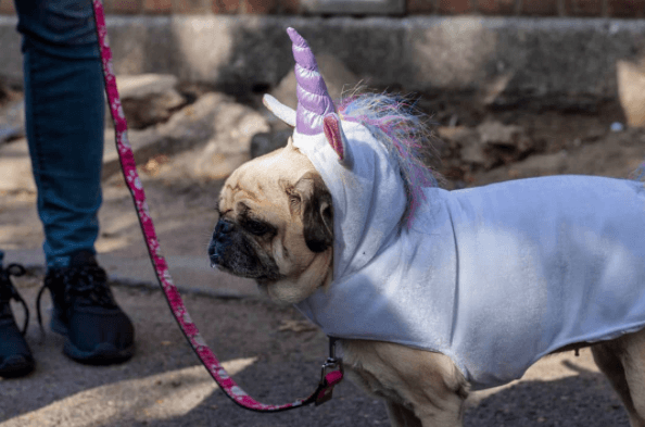 New Yorkers with Cool Halloween Costumes