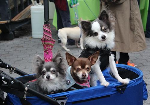 Dog Fair in Central Park