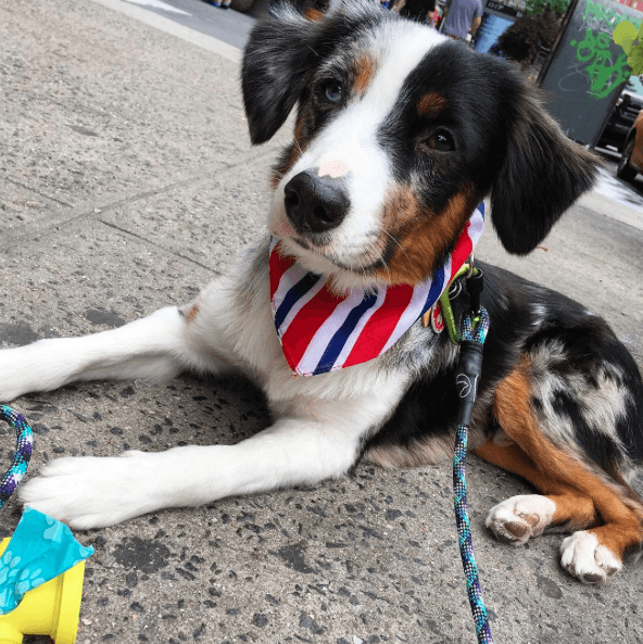 Cutest Dogs on the Upper West Side