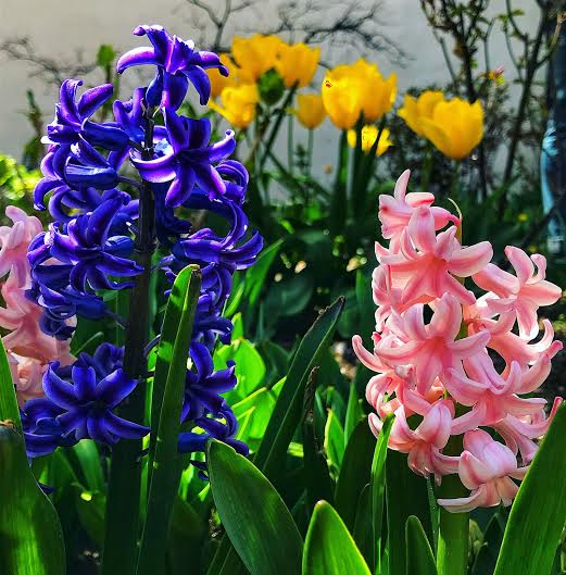 Annual Benefit Garden Party