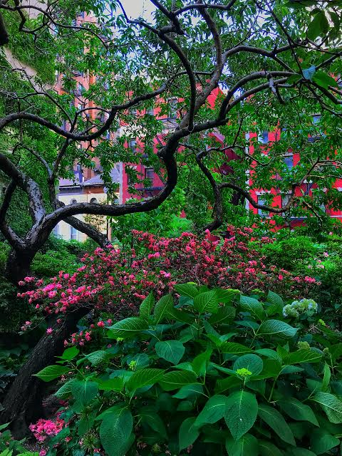 The Lotus Garden A Secret City Gem I Love The Upper West Side