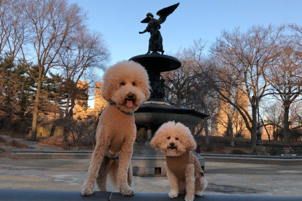 Cutest Dogs of Central Park - Charlie and Sawyer