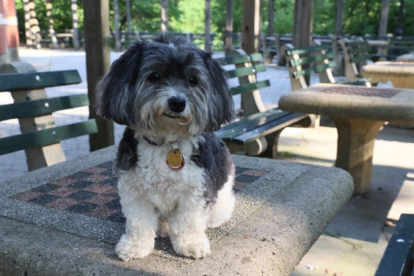 Cutest Dogs of Central Park - Charo