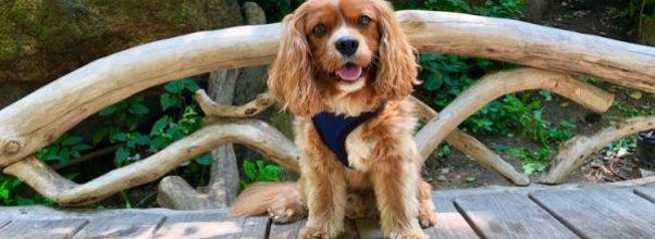 cutest dogs of central park