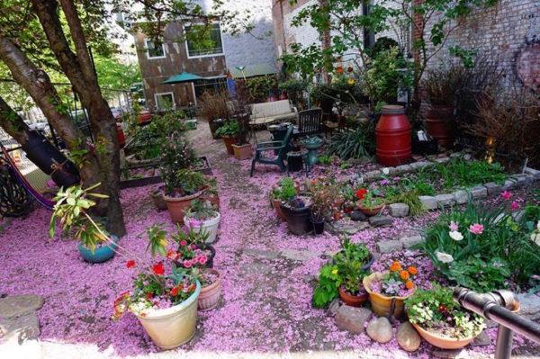 mobilization for change community garden