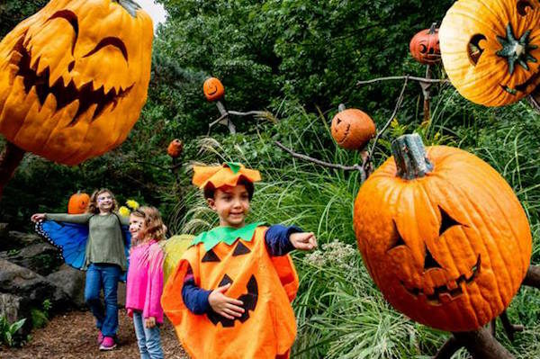 Spooky Pumpkin Garden NYBG