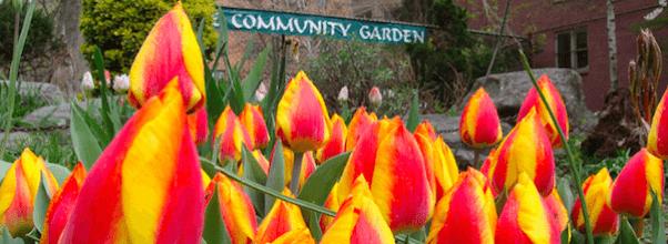Tulip Fest Kicks Off This Weekend!