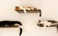 Cat Cafes in NYC