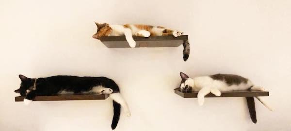Koneko Cat Cafe NYC