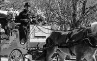 Central Park Horse Carriage Laws