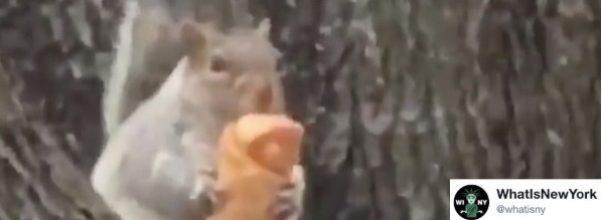 Egg Roll Squirrel