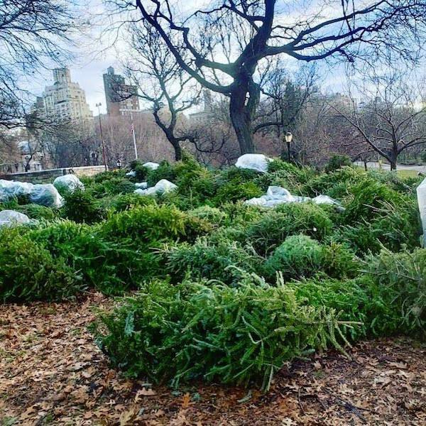 Mulchfest Riverside Park NYC