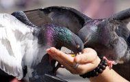 Rules on Feeding Wildlife in NYC Parks