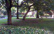 Theodore Roosevelt Park UWS