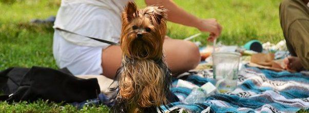 The 5 Best Picnic Spots on the Upper West Side