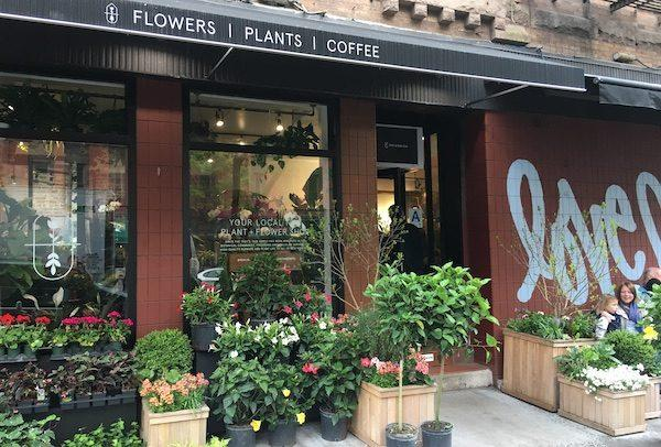 Plantshed NYC Plant Store
