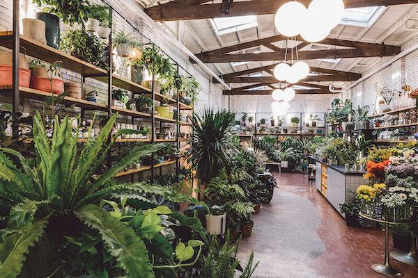 Sprout Best NYC Plant Store