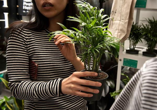 The Sill Plant Shop NYC