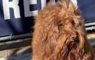 dog friendly UWS NYC