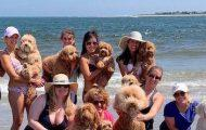 A Dog Beach for the Dog Days of Summer