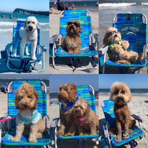Longport Dog Beach NJ