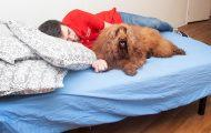 There's A New Doggy Day Care Where A Human Attendant Will Sleep Next To Your Dog