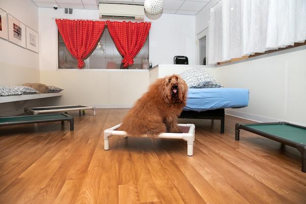 Prince Dog Upper West Side