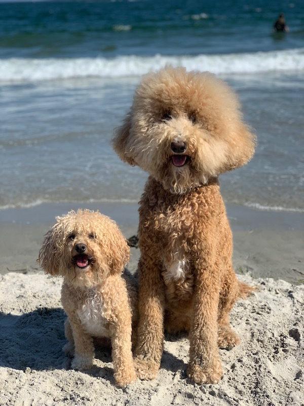 dog beach longport new jersey