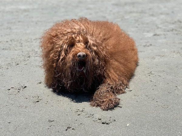 dog beach near nyc