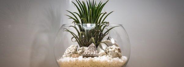 terrarium making class