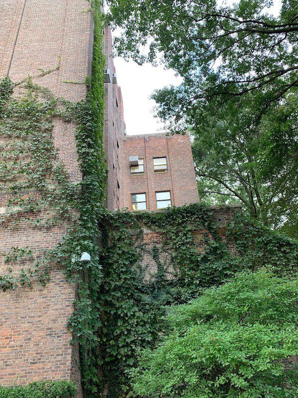 AMNH Ivy Building