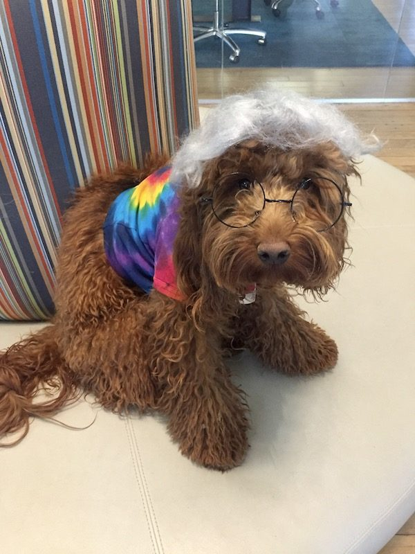 Jerry Garcia Dog