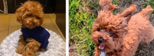 10000 reward Tory Burch missing dog