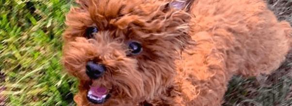 Tory Burch's Dog Returns Home