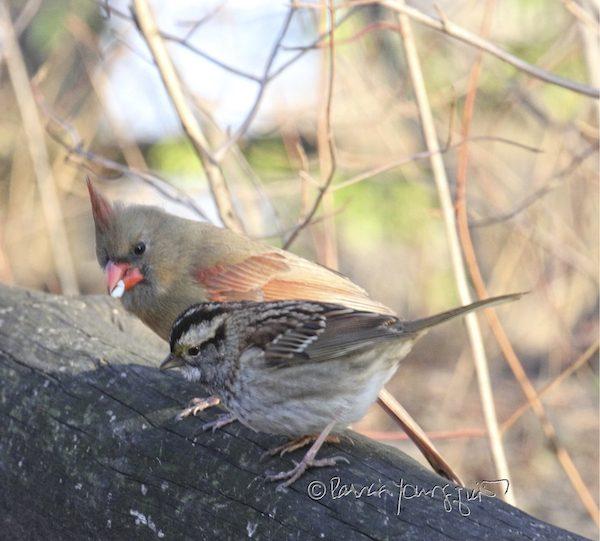 birds Central Park