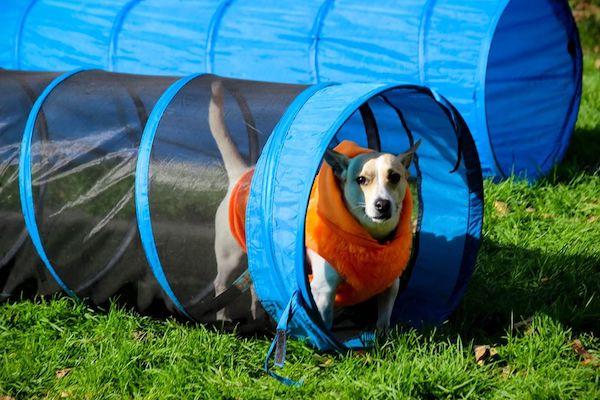 Dog Fest Riverside Park