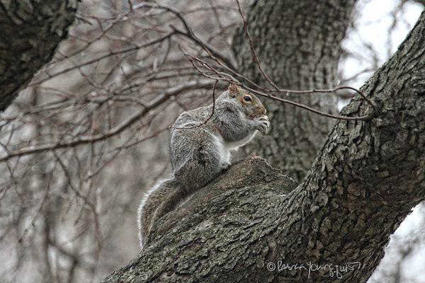 Squirrel Riverside Park