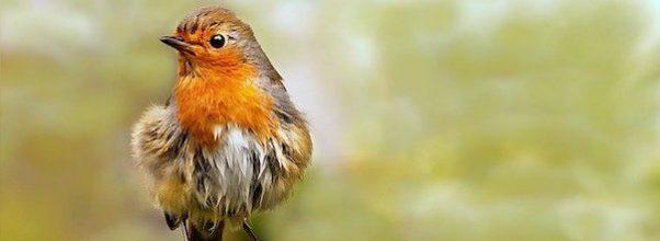 120th Annual Central Park Christmas Bird Count