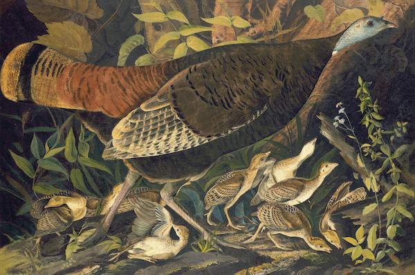 Audubon Birds NY Historical Society