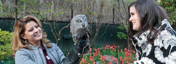 Wild Bird Fund's Spring Flocktail Party
