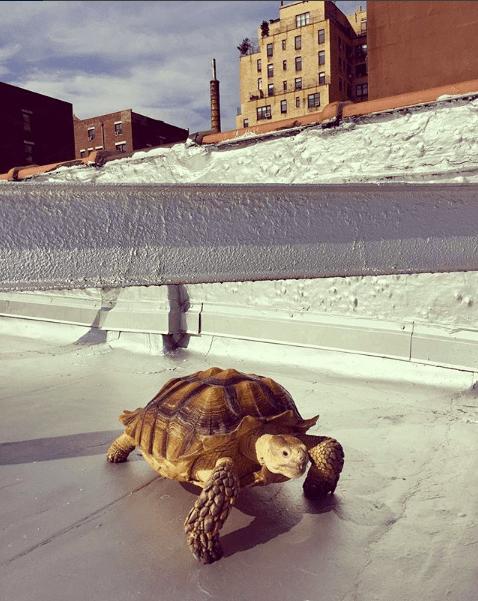 Henry The Tortoise