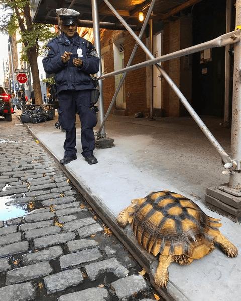 Henry Tortoise NYC