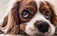 AKC Canine Retreat Closing